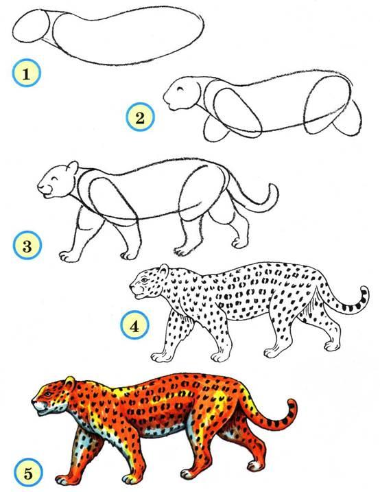 Леопард рисуем карандашом поэтапно