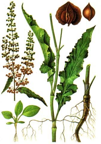Народная медицина при кашле и насморке