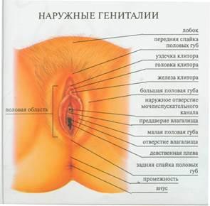 Женские половые органы анальный канал в сперме #6