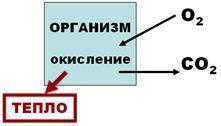 Корнеальный рефлекс рефлекторная дуга