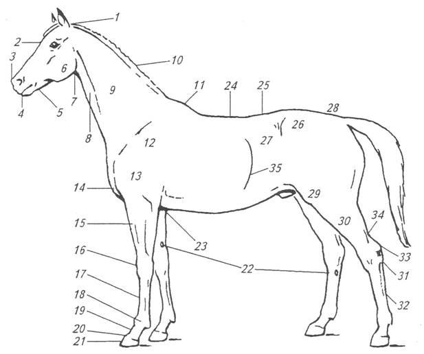 Слабость суставного аппарата у лошадей признаки контрактуры локтевого сустава