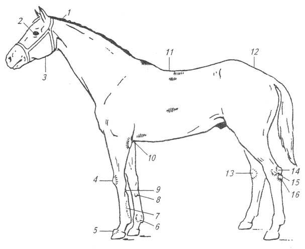 Порок скакательного сустава лошади ломота в суставах во всем теле