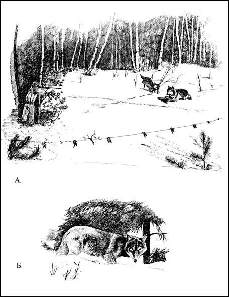 Стрельба волков в окладе с флажками.