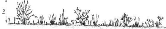 Тропические и субтропические пустыни и полупустыни