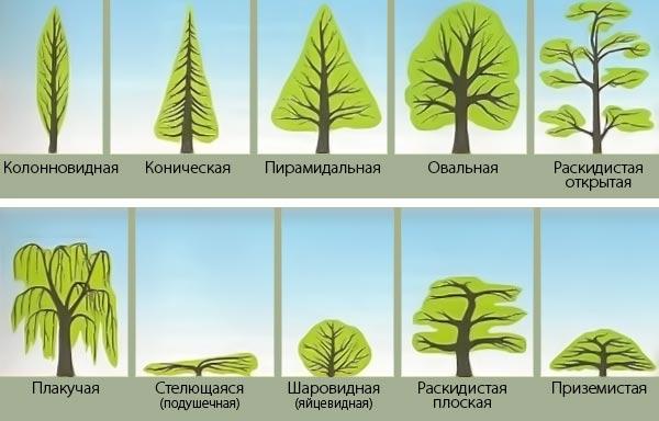 Тема 2. Биологические и экологические свойства древесно-кустарниковых растений, их распространение.