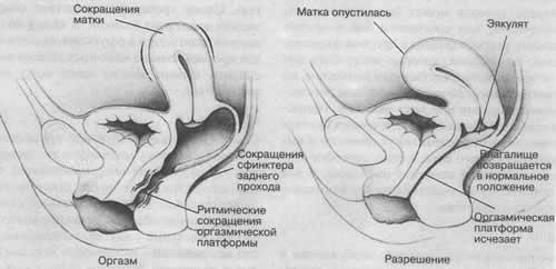 temperamentnaya-zhenshina-seks