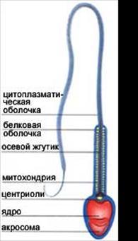 rasslablyayushiy-massazh-s-eroticheskimi-elementami