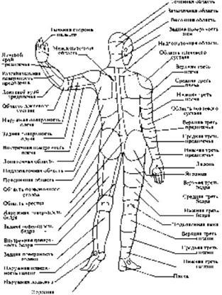 Схема наружного строения тела