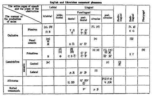 Differences In The Articulation Bases Of English And Russian Consonants And Their Peculiarities Lektsiopedia