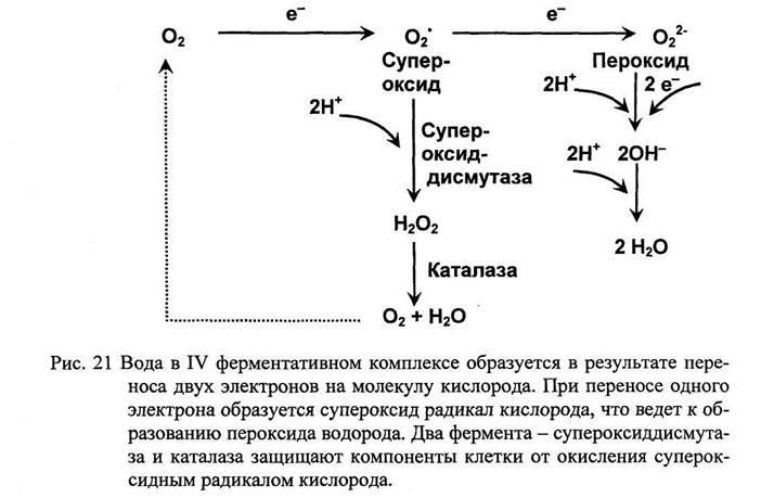 Оксидаза