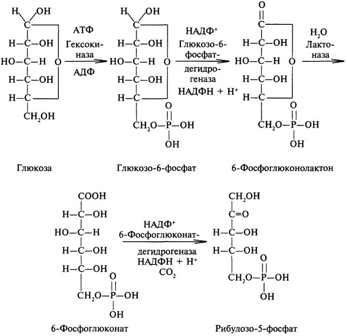 Анаэробная фаза анатомического