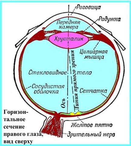 Оптическая схема глаза.