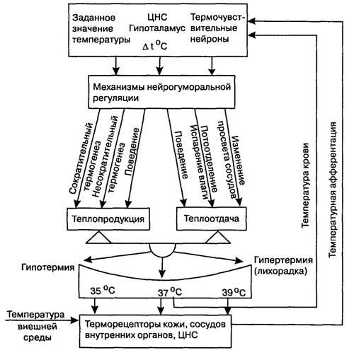 Схема механизмов регуляции