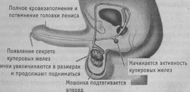 zhenshina-v-chulkah-i-korotkom-plate-foto