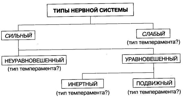 типов темпераментов с