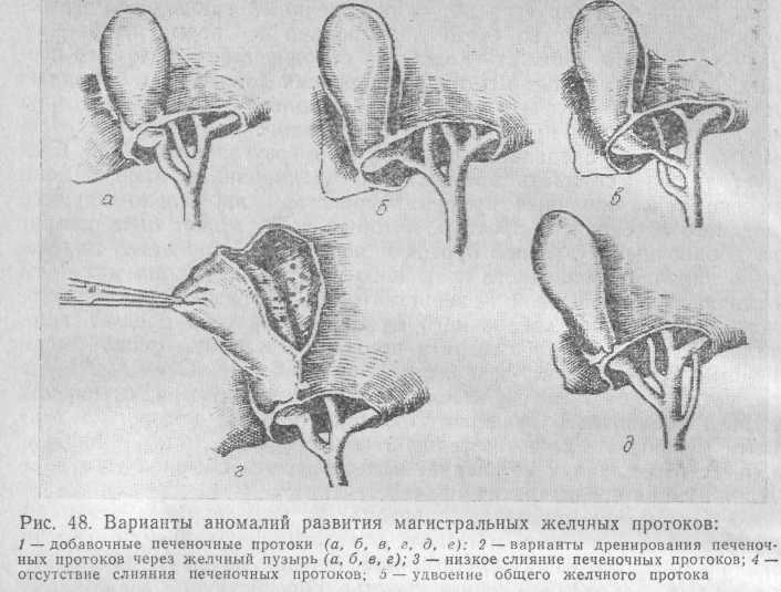 Проток Стенонов