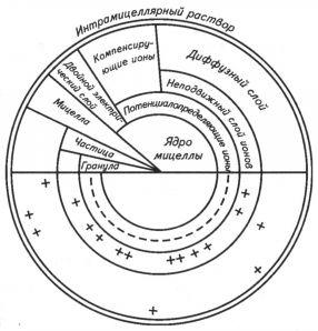 Мицелла строение схема