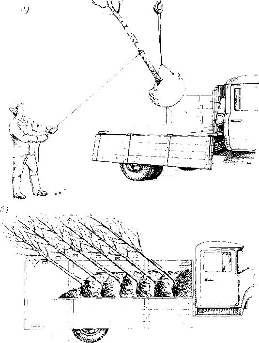 Схема погрузки дерева с комом,