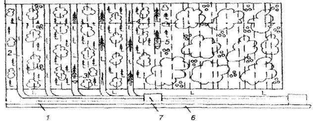 Схема разработки лесосеки при