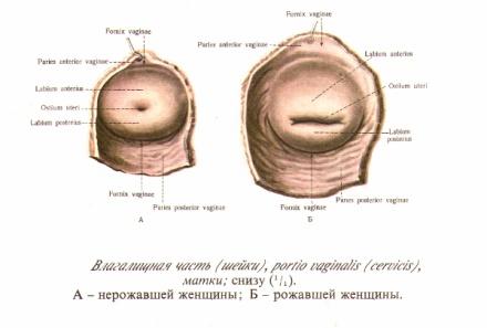 foto-devushek-visokogo-razresheniya