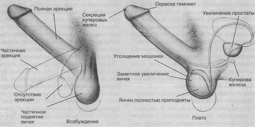 Порно фото позируют раком