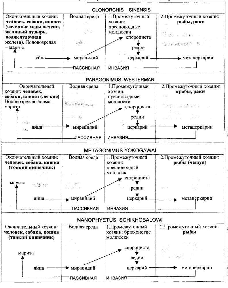 Медицинская паразитология таблица сосальщики