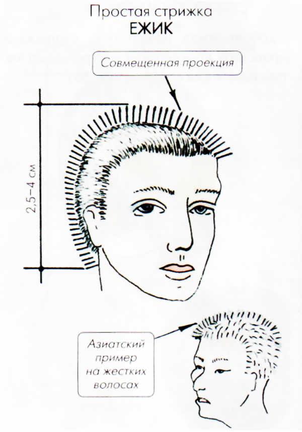 стрижки женские мужские схемы