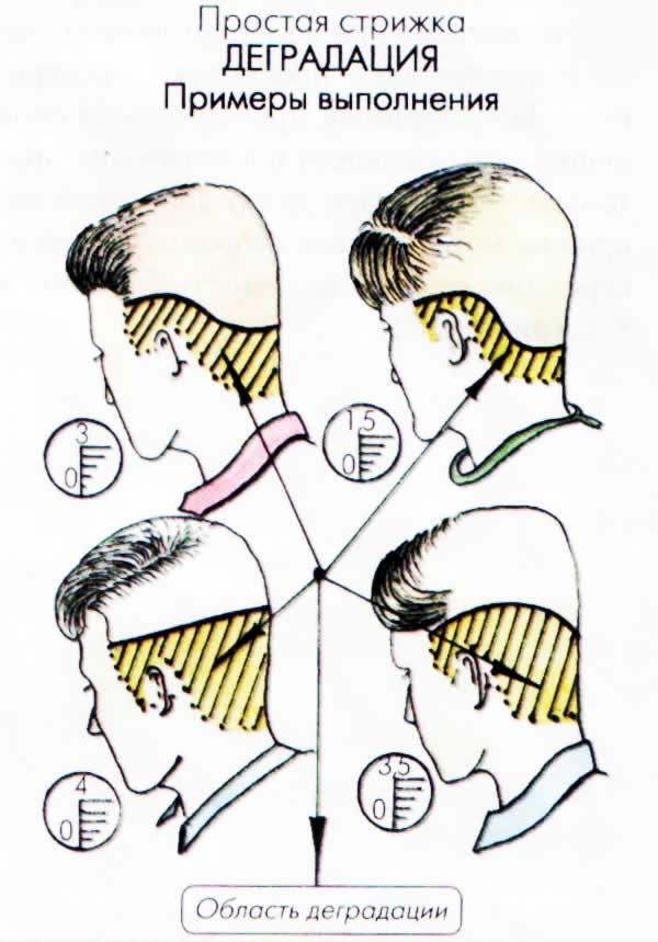 Схемы проборов на голове для стрижек