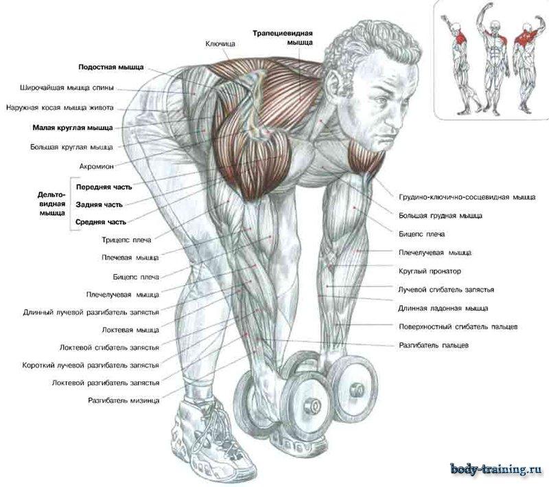 Подъем гантелей в наклоне на спину
