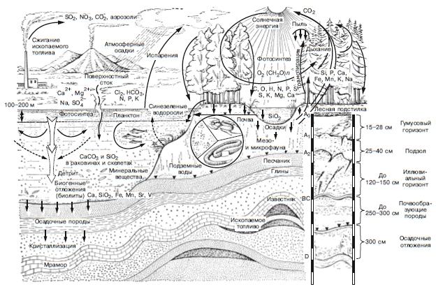 Состав и границы биосферы