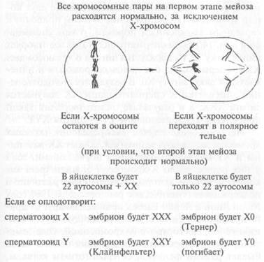 Яйцеклетки сперматозоида женские хромосомы хх мужские х зарубежные