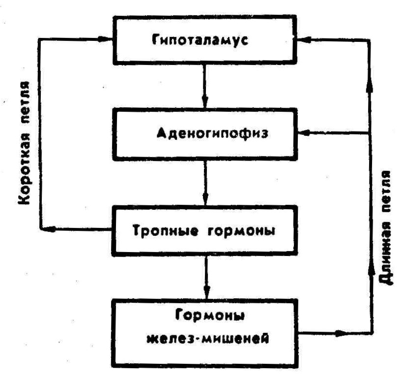 Нейросекреция