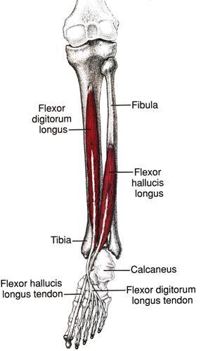Лечение при боли в паху и отдает в ногу