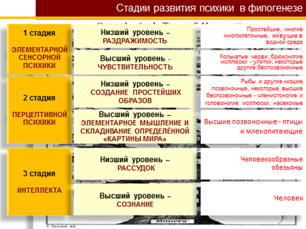 этапы развития психики схема