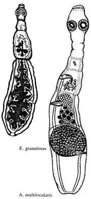 асд 2 от паразитов отзывы