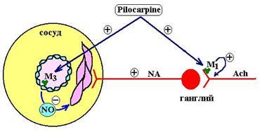 Средства для лечения глаукомы из группы м холиномиметиков