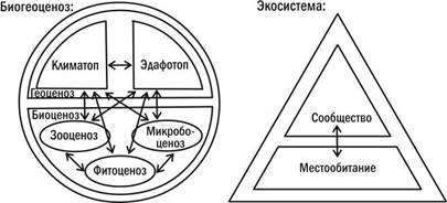 Схема на тему экосистема