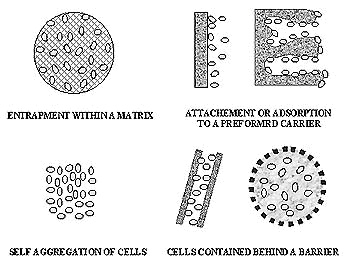 IMMOBILIZED CELLS EBOOK DOWNLOAD