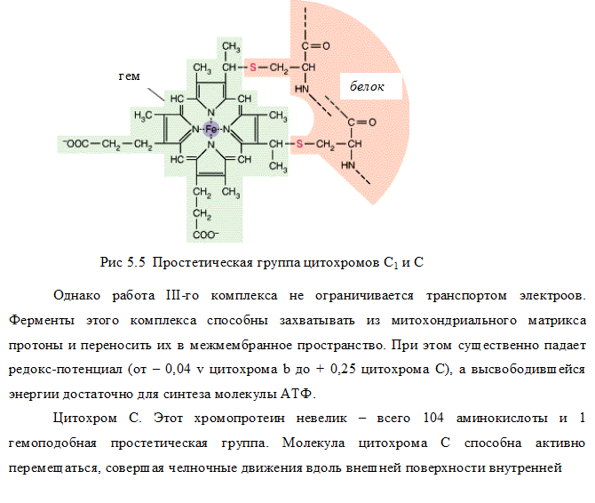 IV комплекс дыхательной цепи