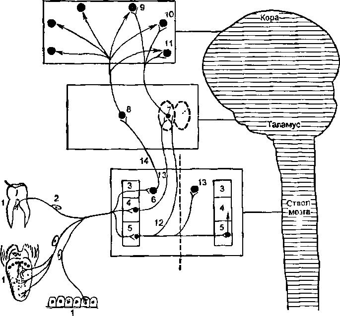 Ипсилатеральный
