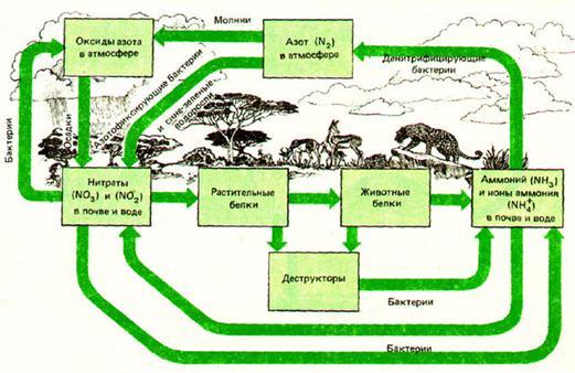 Упрощённая схема круговорота