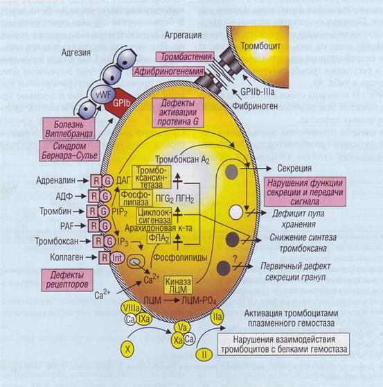 Схема механизмов развития