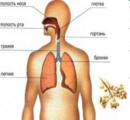 Газообмін між кров'ю і тканинами відбувається в