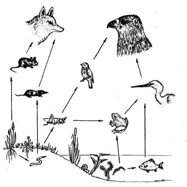 Схема, иллюстрирующая пищевые