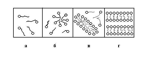 Схема образования мицелл в
