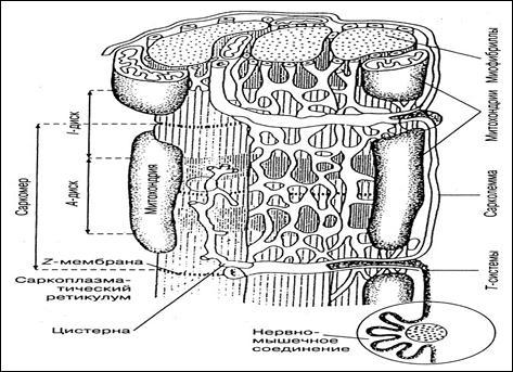 Схема расположения Т-систем и