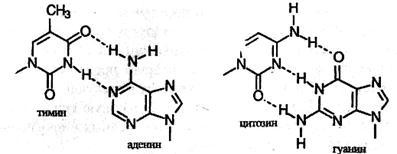 Строение нуклеиновых кислот