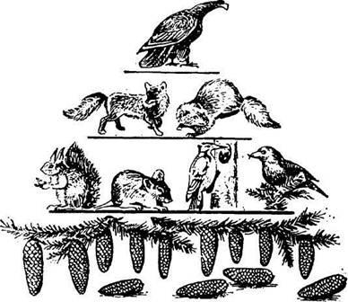 схема пирамиды численности