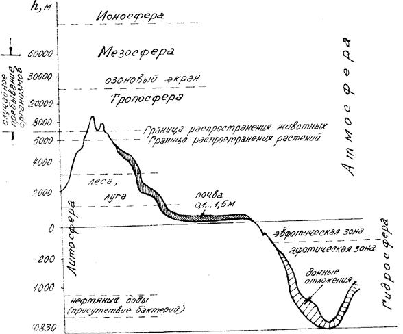 Схема строения биосферы
