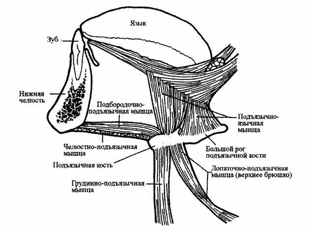 Узор паучки спицами схема
